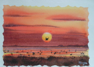 Coucher de soleil en cammargue