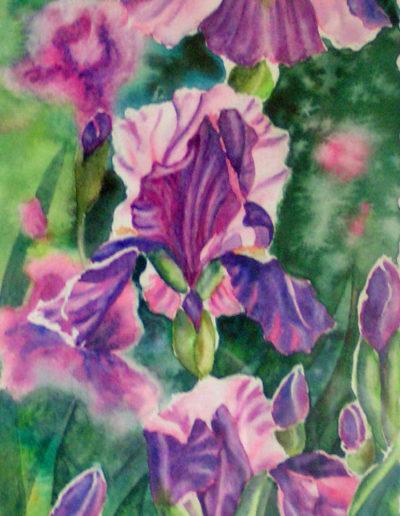 Iris en ré
