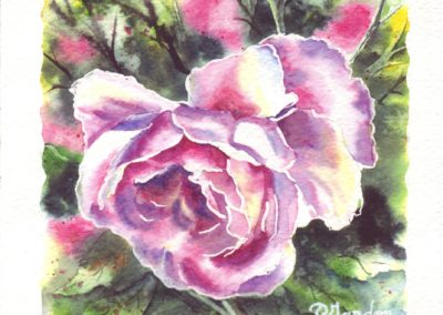 Roses n°2