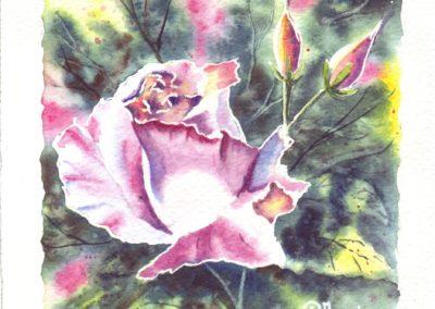 Roses n°4
